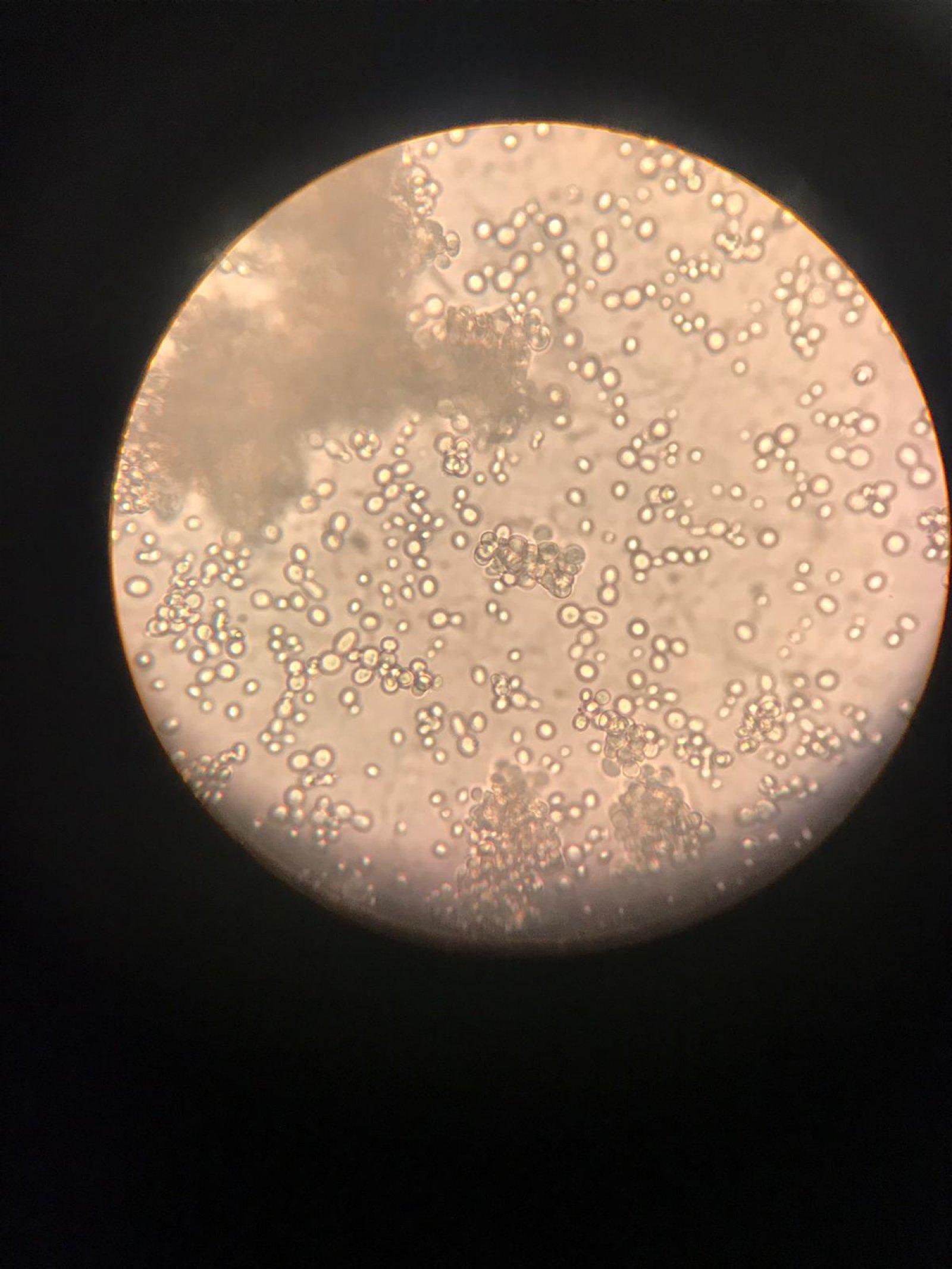 10. sınıflar biyoloji laboratuvar çalışmaları